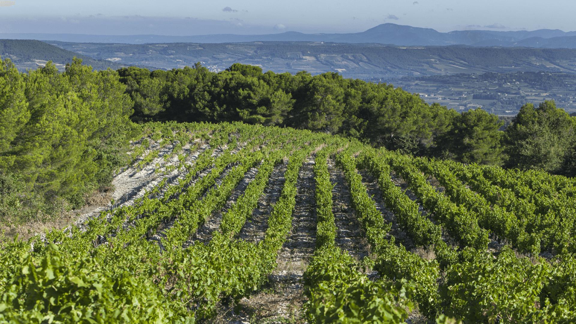 Côtes du Rhône Villages Séguret 2016